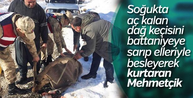 Yaralı dağ keçisinin imdadına Mehmetçik yetişti