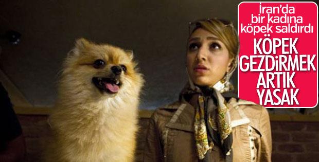 Tahranda köpek gezdirmek artık yasak 72