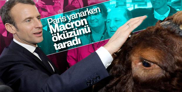 Sarı Yelekliler eylem yaparken Macron öküz sevdi