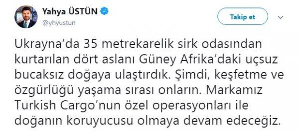 Turkish Cargo sirk aslanlarını doğal alanlarına kavuşturdu