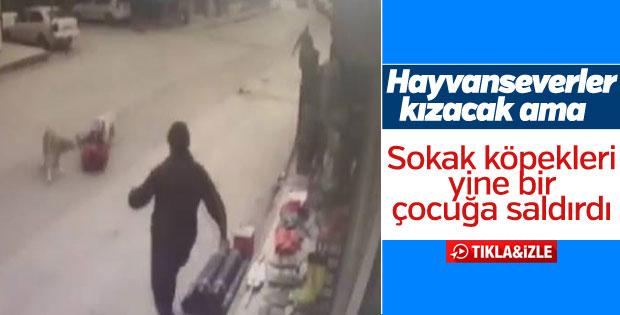 Sakarya'da sokak köpekleri çocuğa saldırdı