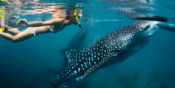 Köpek balıklarıyla serbest yüzeceğin denizler