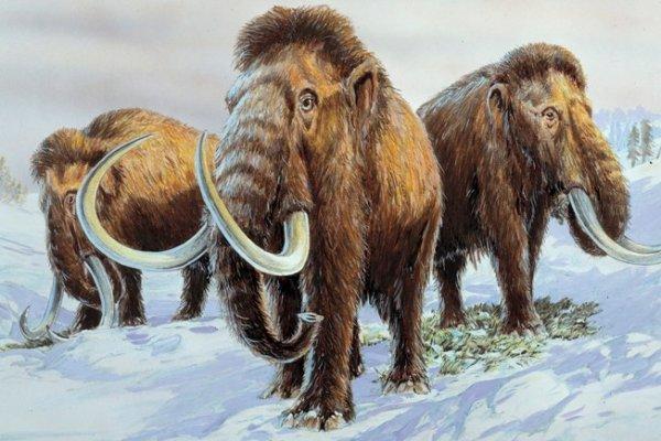 mamut,
