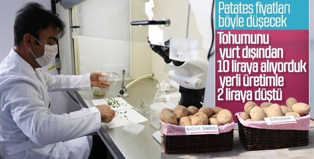 İki patates çeşidi daha Türk tarımına kazandırıldı