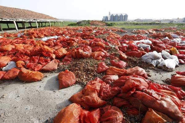 Ankara'da tonlarca soğan çöp oldu