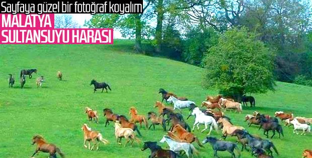 En güzel atların yetiştiği yer: Sultansuyu Harası