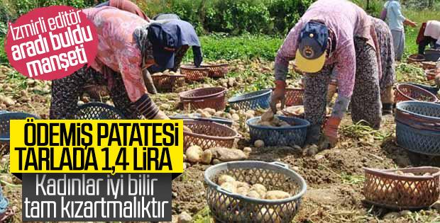 Ödemiş'te patates hasadı başladı