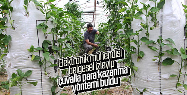 Antalya'da elektrik mühendisi biber üretiminde çığır açtı