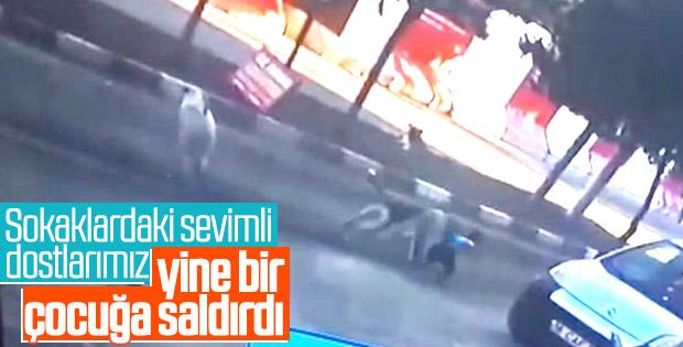 5 yaşındaki çocuğa sokak köpekleri saldırdı