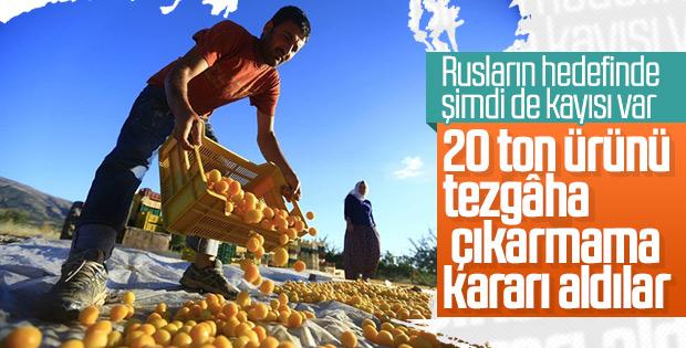 Rusya 20 ton kayısı tezgâha çıkarmama kararı aldı