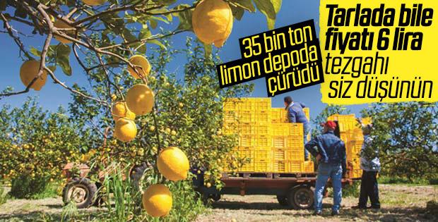 Yağmur yiyen limonlar erken çürüdü