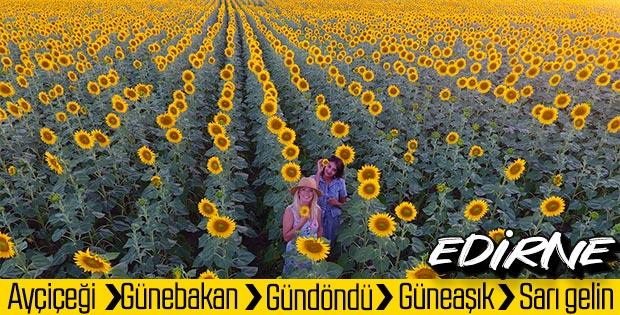 Edirne'de fotoğraf tutkunları tarlalara koşuyor