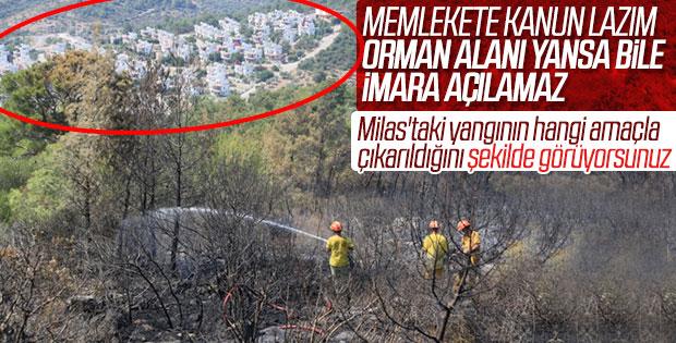 Milas'ta şüpheli orman yangını