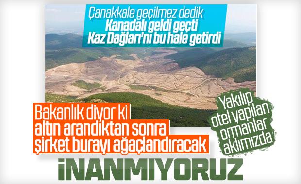 Kaz Dağları'ndaki ağaç kesimi için Bakanlık açıklama yaptı