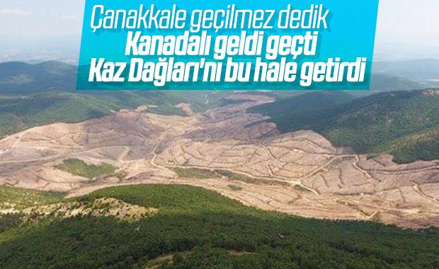 Kaz Dağları'ndaki altın madeni için yapılan ağaç katliamı