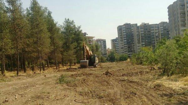 HDP'li Batman Belediyesi 170 ağacı katletti
