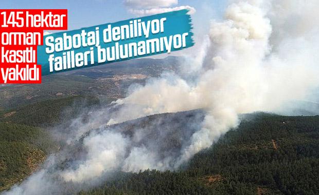 Bursa'daki orman yangınının sebebi sabotaj