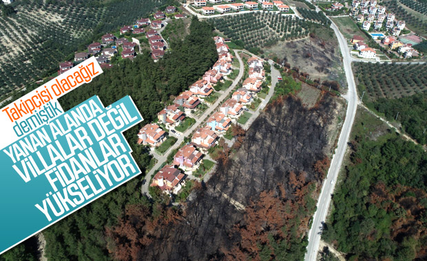 Bursa'da geçtiğimiz yıl yanan orman yeniden ağaçlandırıldı