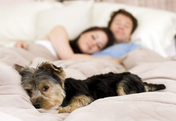 Hollandalılara uyarı: Köpeğinizi yatağınıza almayın