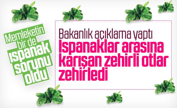İstanbul'da ıspanaktan zehirlenenlerin sayısı artıyor