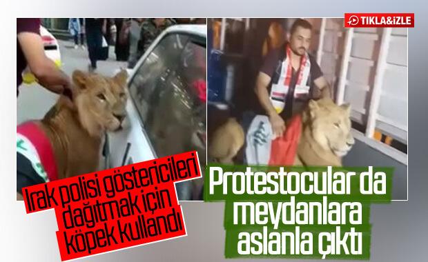 Iraklı protestocular köpeklere karşı aslanla meydan okudu