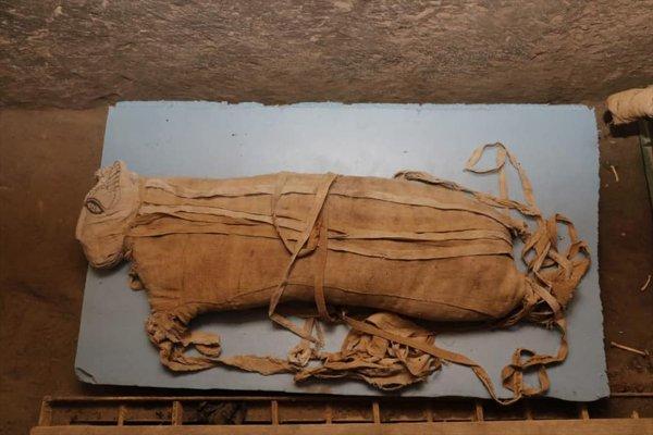 Mısır'da kedi mumyası bulundu