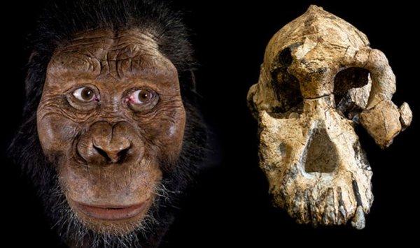 Evrimciler ilk atamız bu diyor