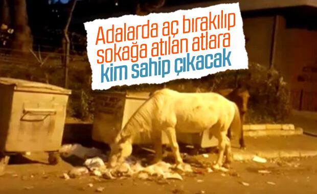 Büyükada'da atlar çöpte yemek ararken görüntülendi
