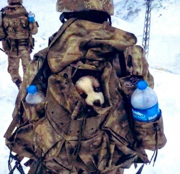Mehmetçik, karlı arazide bulduğu yavru köpeği yanına aldı
