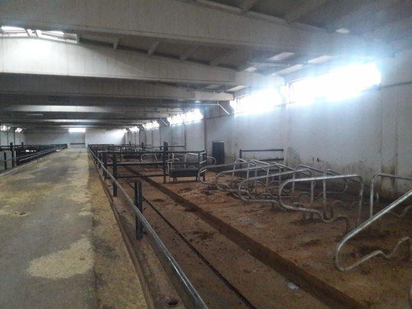 Diyarbakır'da Çiftlik Bank yöntemi dolandırıcılık