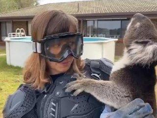 Sunucuya koalayı 'vahşi ayı' diye tanıttılar