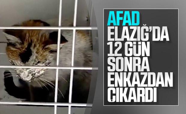 Elazığ'da enkaz altındaki kedi, 12 gün sonra kurtarıldı