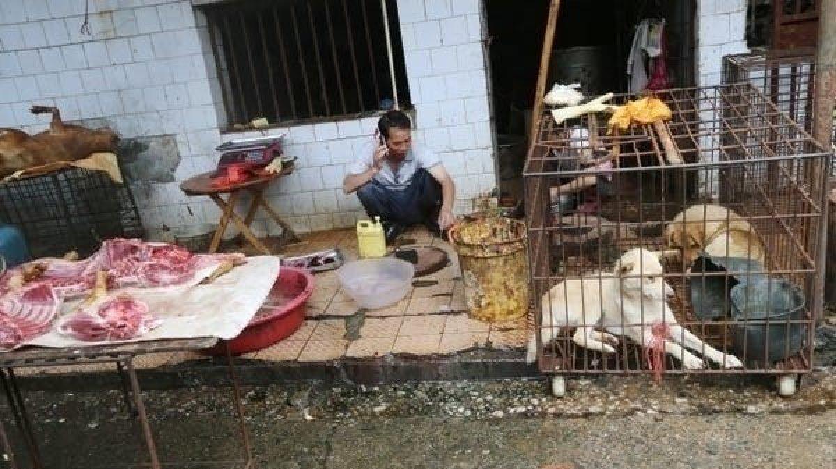 Çin'de vahşi hayvan pazarları yeniden kuruldu