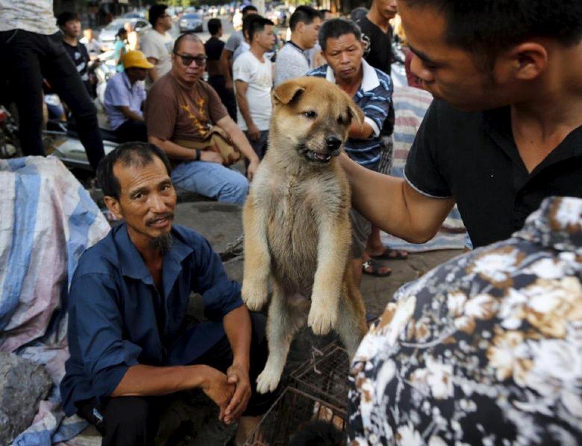 Çin'in Şenzen şehrinde kedi ve köpek yemek yasaklandı