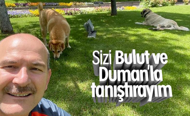 Soylu, sahiplendiği köpeklerin fotoğraflarını paylaştı