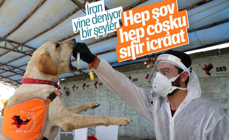 İran'da köpekler koronavirüsü teşhis etmek için eğitildi