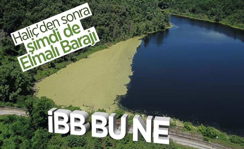 Elmalı Barajı, yeşil tabakayla kaplandı