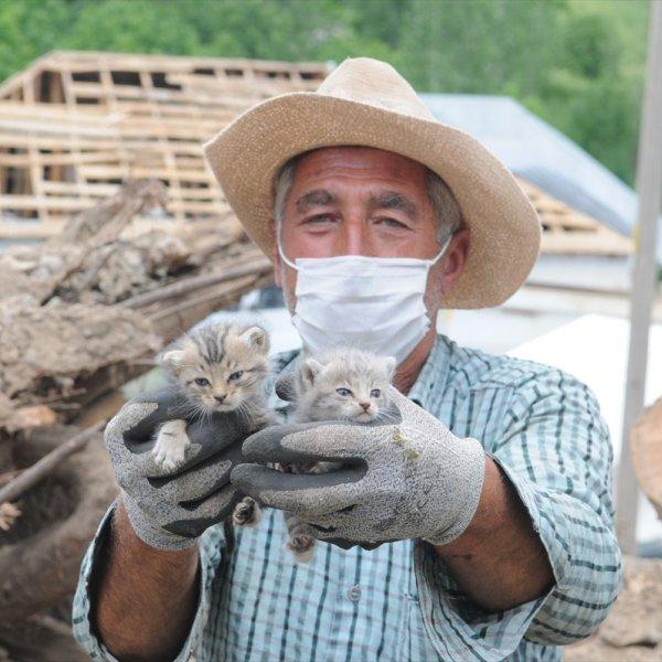 Depremden 5 gün sonra yavru kediler enkazdan sağ çıktı
