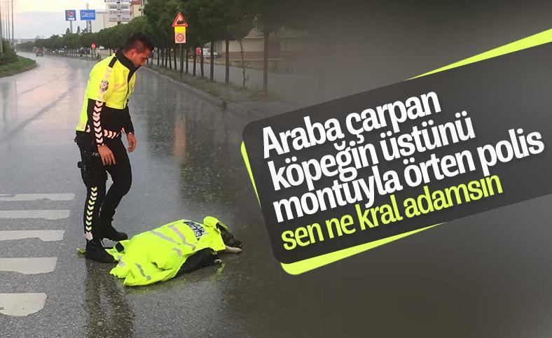 Yozgat'ta polis, montuyla köpeği korudu