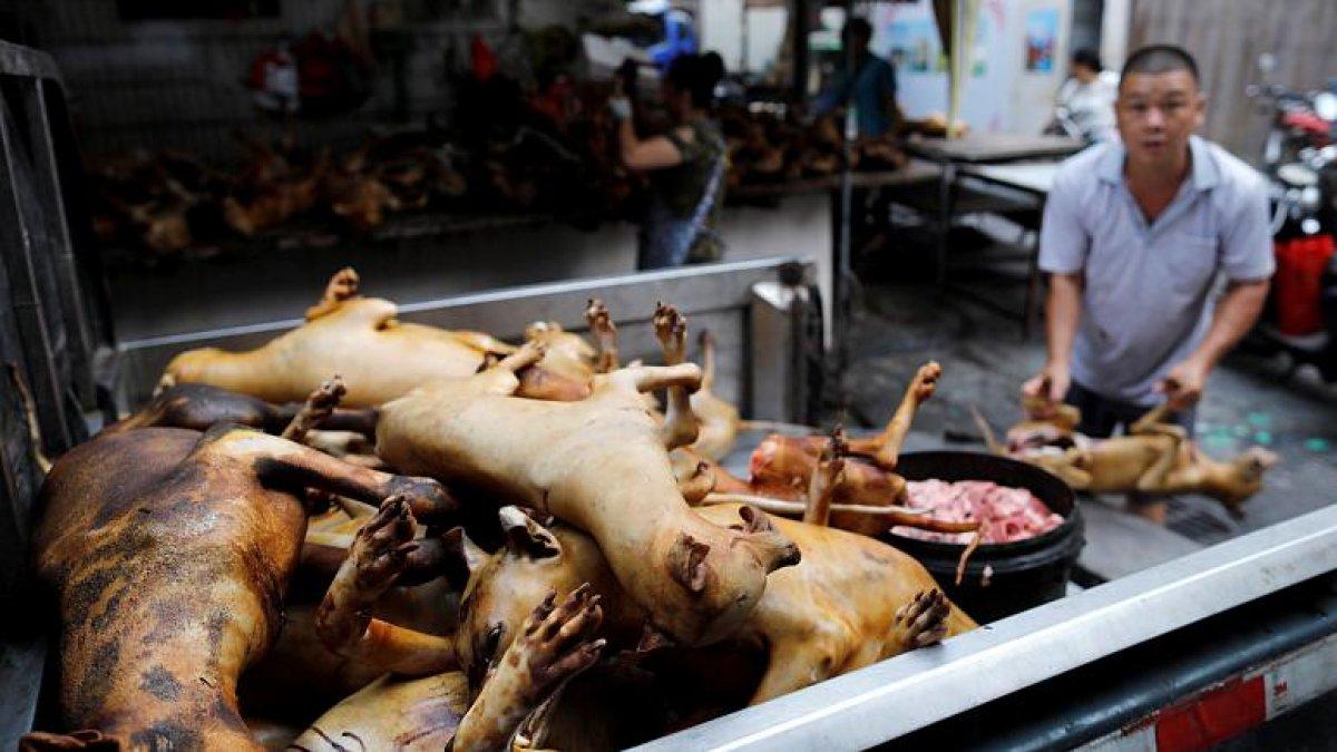 Çin'de köpek eti festivali bu yıl da yapılıyor #4