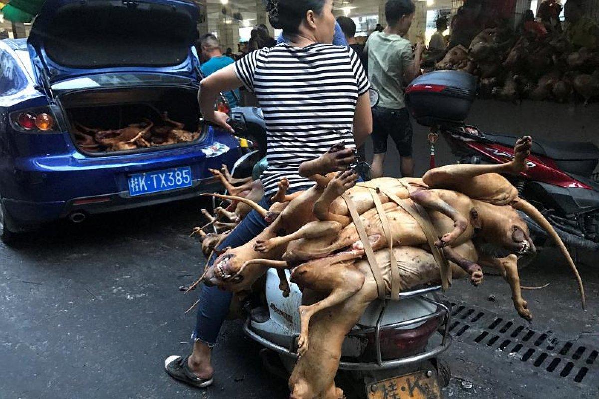 Çin'de köpek eti festivali bu yıl da yapılıyor #2