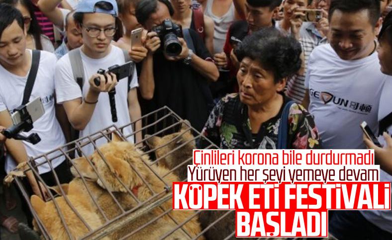 Çin'de köpek eti festivali bu yıl da yapılıyor