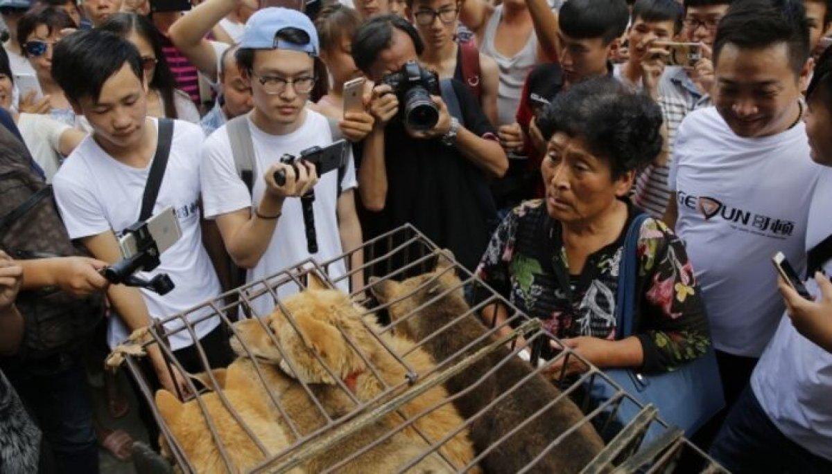 Çin'de köpek eti festivali bu yıl da yapılıyor #3