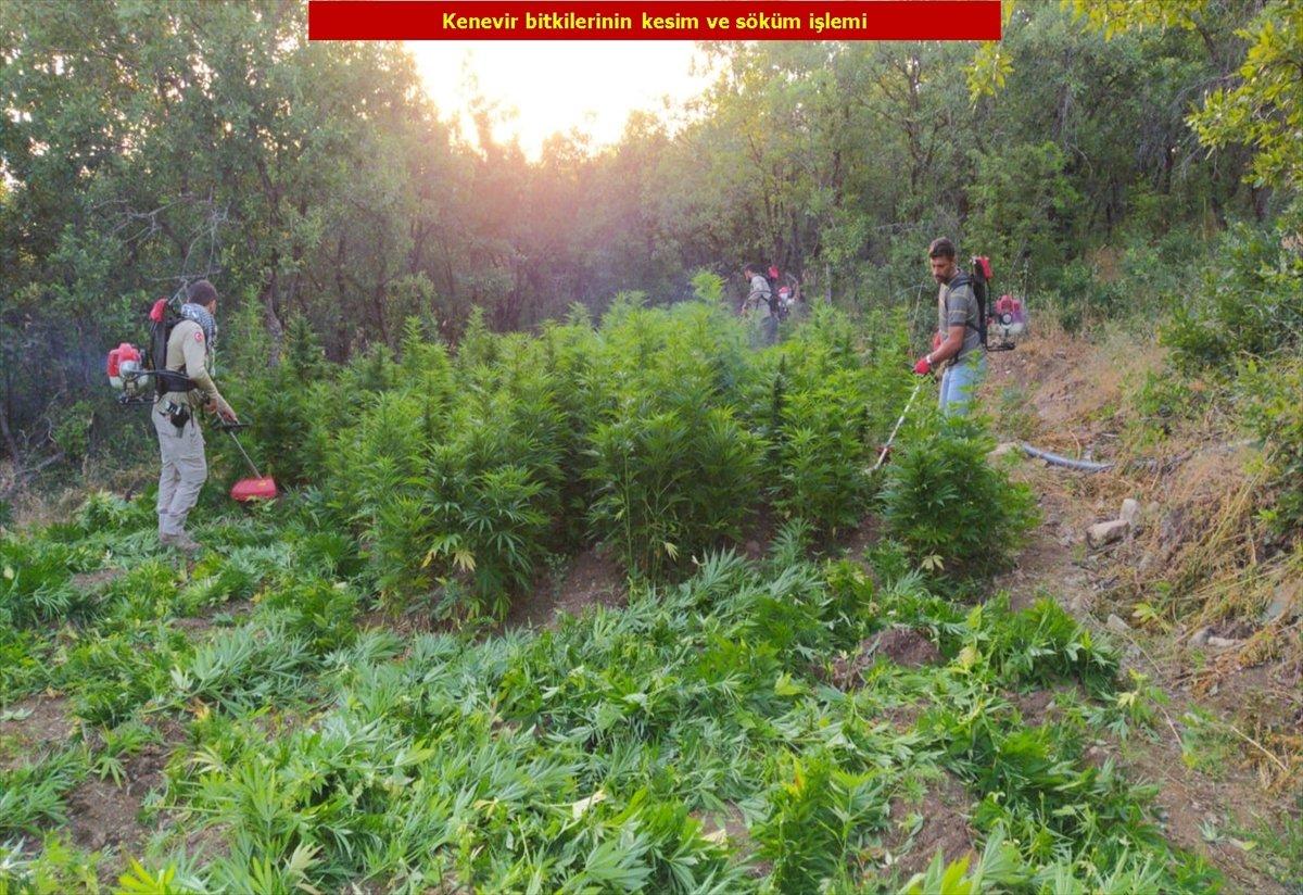 Diyarbakır'da son 4 yılın rekoru: 7.5 milyon kök kenevir #9