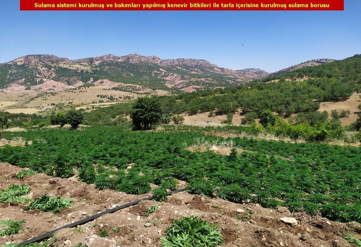 Diyarbakır'da son 4 yılın rekoru: 7.5 milyon kök kenevir #7