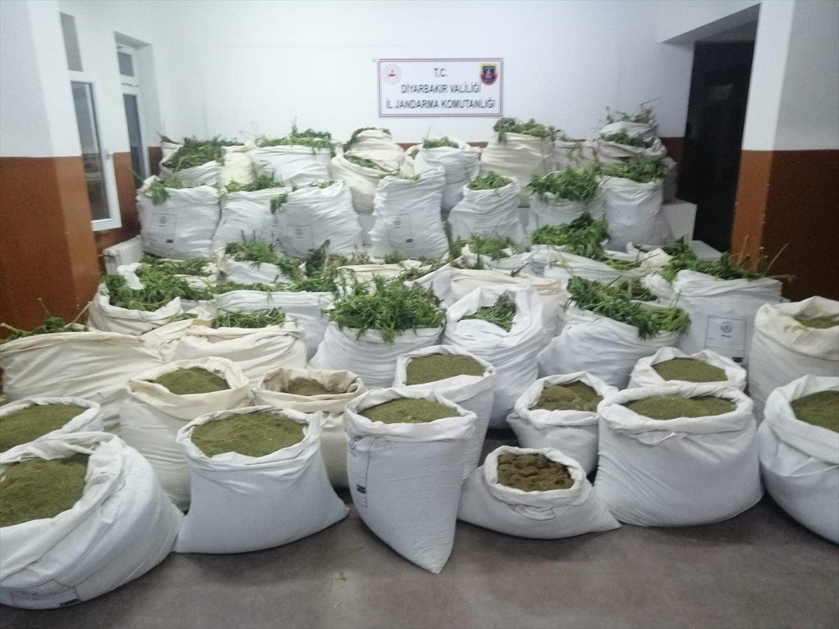 Diyarbakır'da son 4 yılın rekoru: 7.5 milyon kök kenevir #2