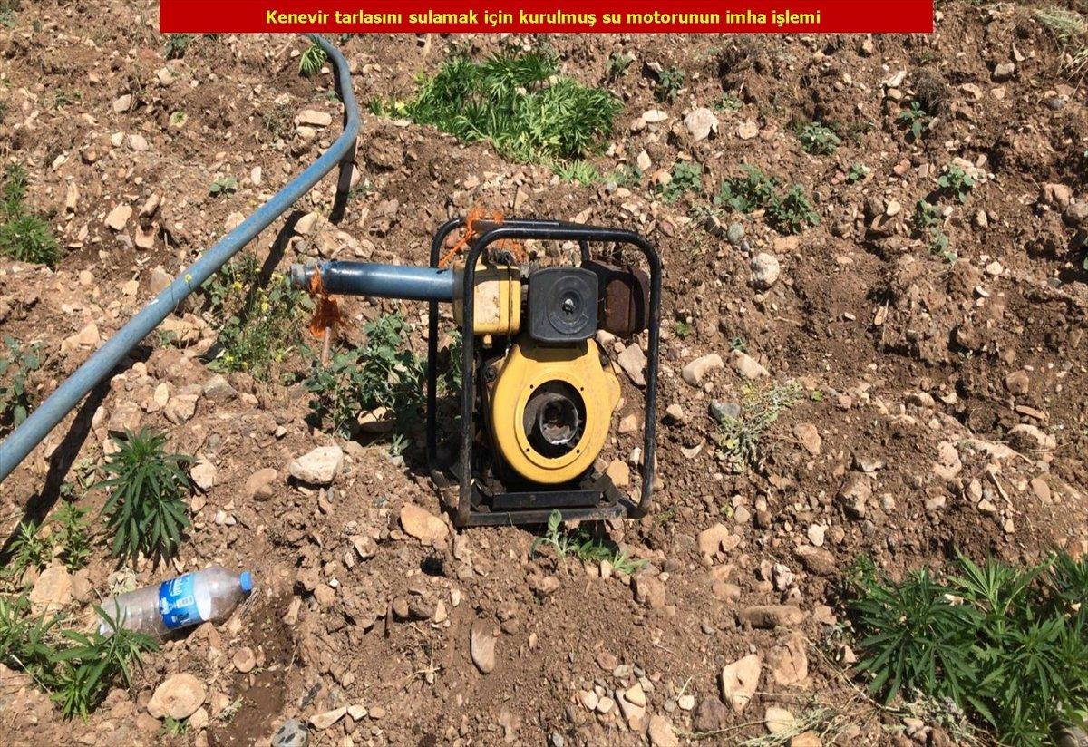 Diyarbakır'da son 4 yılın rekoru: 7.5 milyon kök kenevir #12