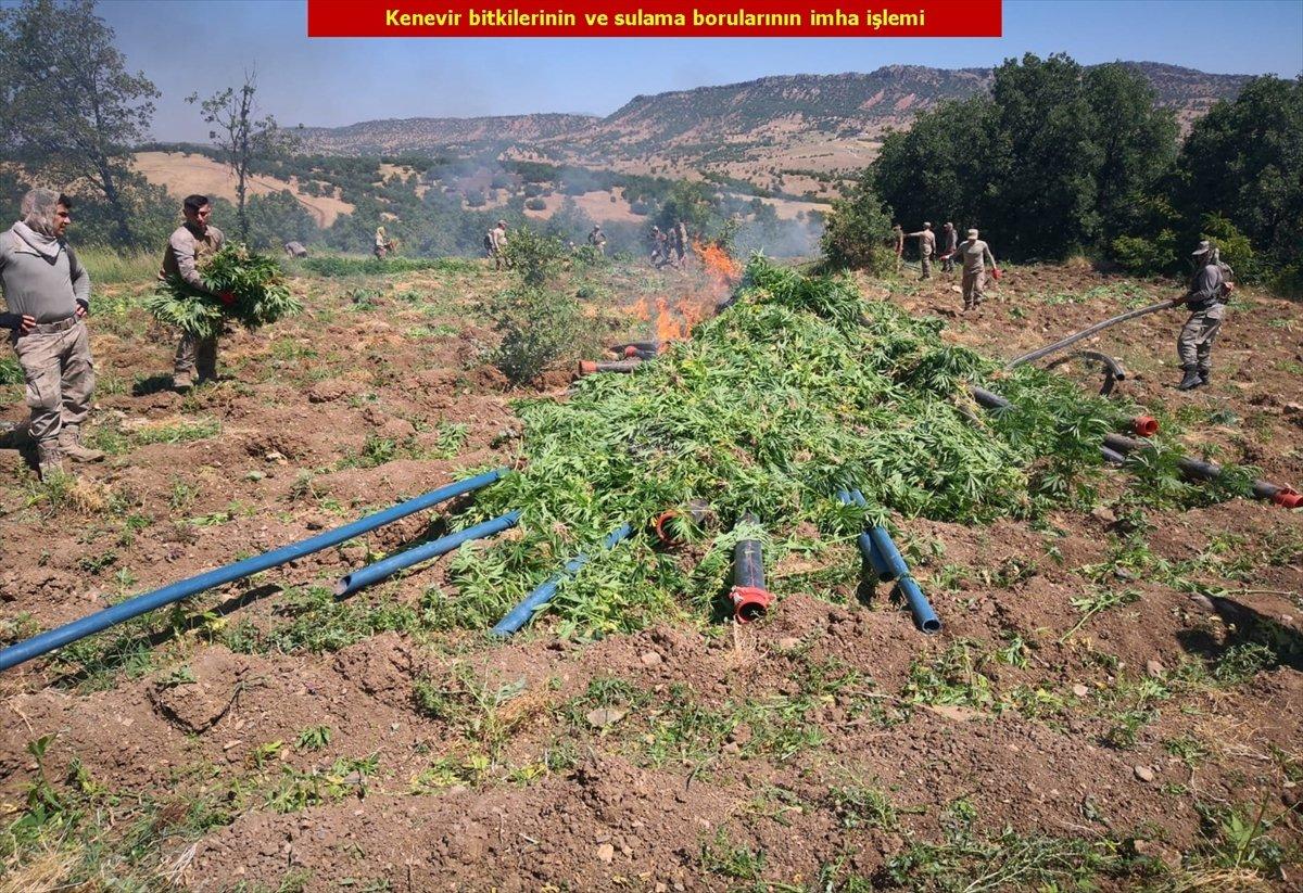 Diyarbakır'da son 4 yılın rekoru: 7.5 milyon kök kenevir #10