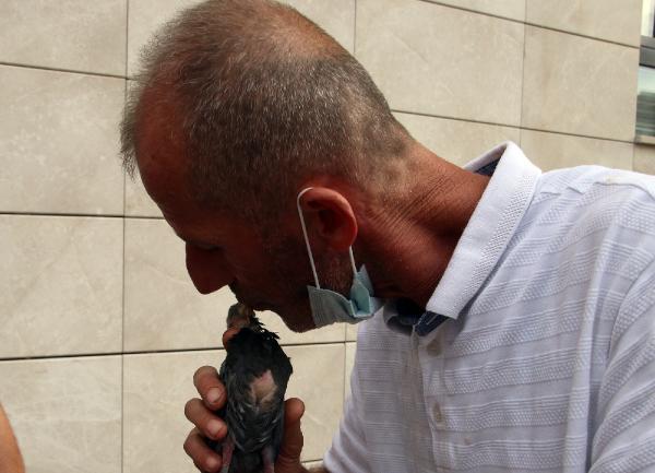 Düzce'de, aç kalan yavru güvercini ağzıyla besledi #2