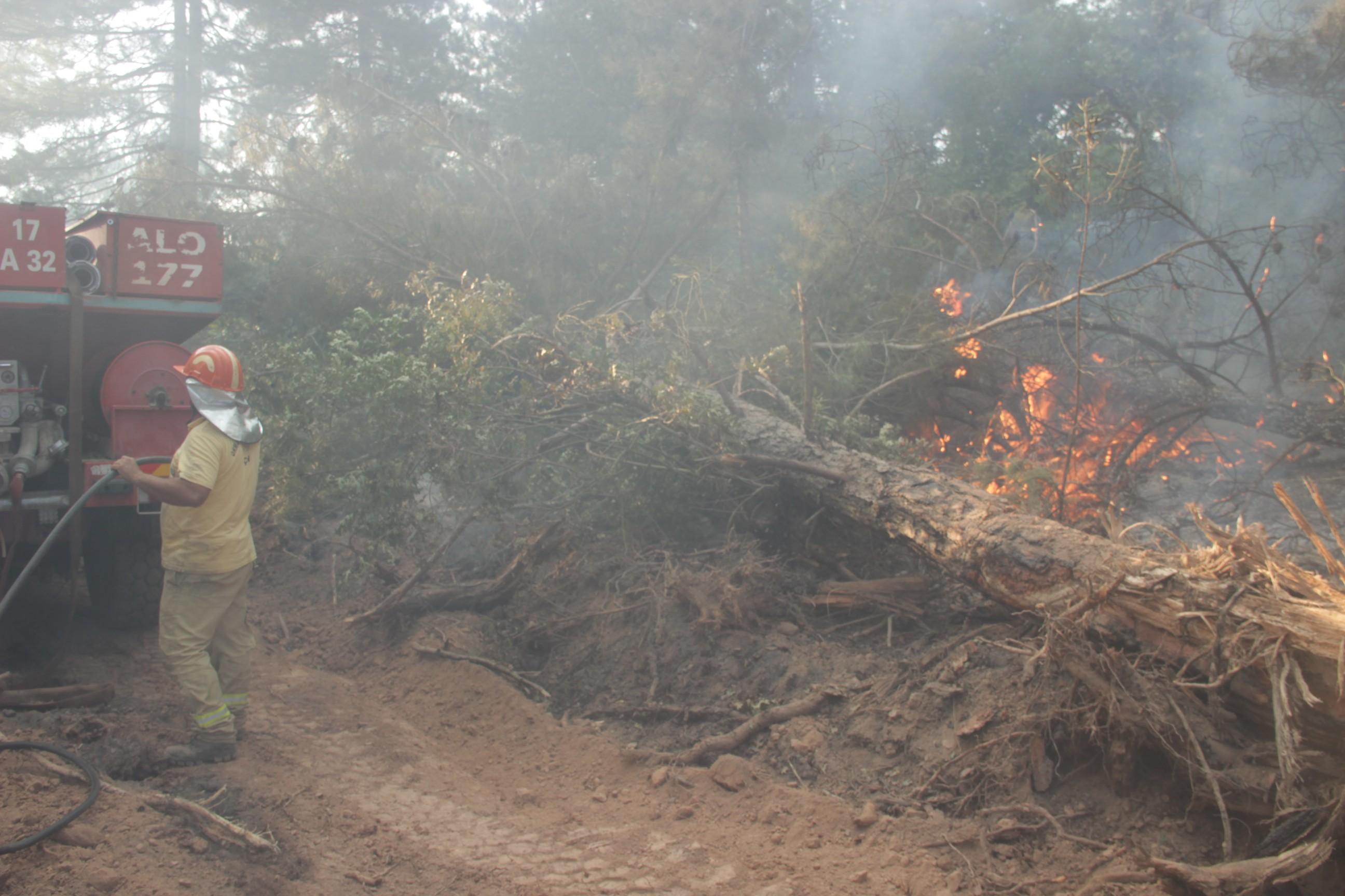 Bakan Pakdemirli: 19 yangından 15'i kontrol altına alındı #6